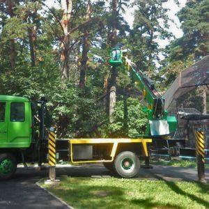 спил деревьев с автовышки новосибирк 6